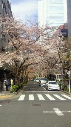 2012sakura-01.jpg
