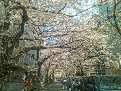 2012sakura-03.jpg